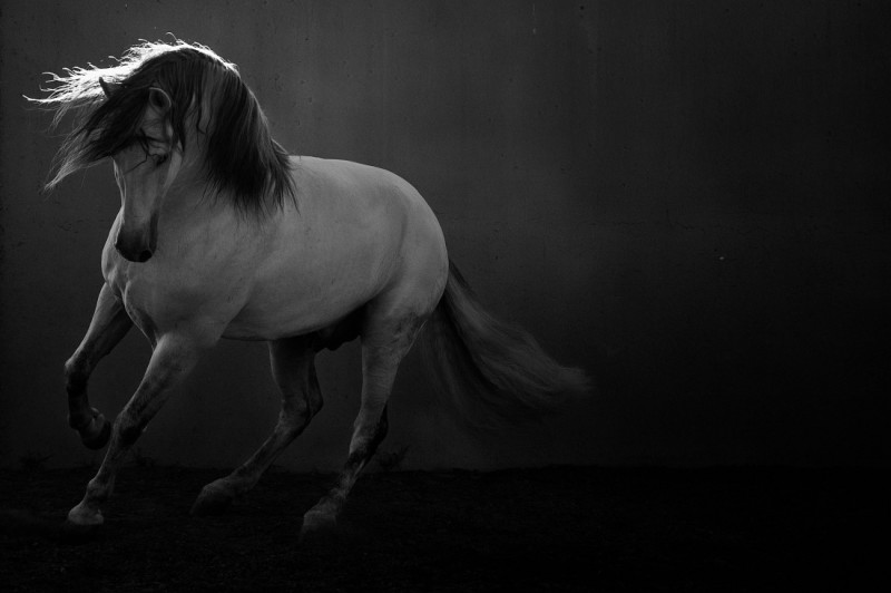 11 Photos That Will Redefine the Way You Look at Horse Photography