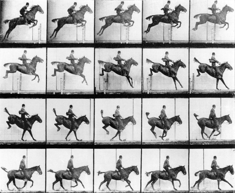 The galloping horse in the horse in motion a photography by edward muybridge