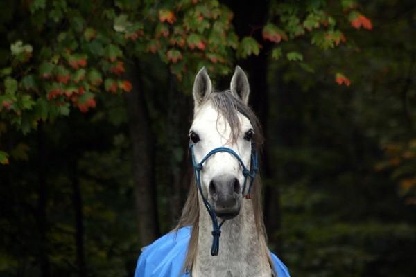 10 Things Horses Hate