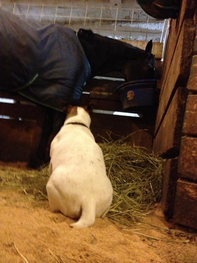 A Good Barn Dog