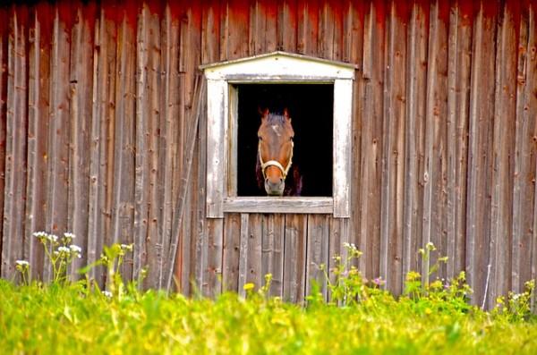 horse-816667_640-600x397