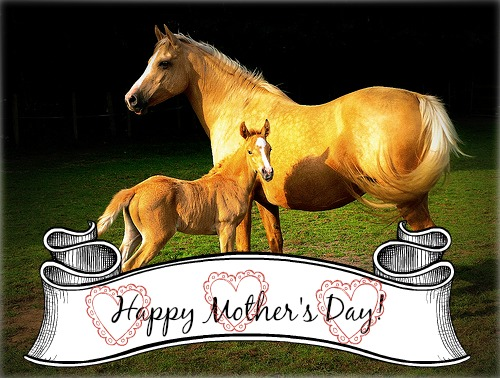 Mare-with-Foal-Mothers-Day_flickr.com_blacktiger303-1