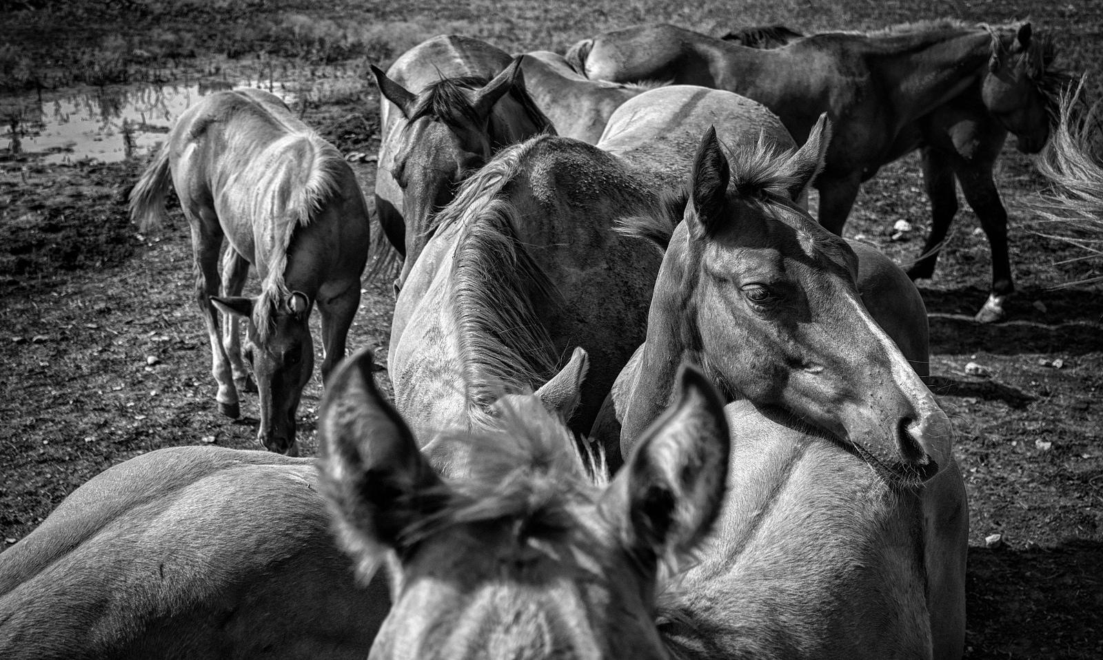 Understanding Herd Interactions and How Horses Relate to Us